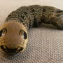 Elephant_hawk_moth_caterpillar_3