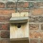 bird box no.2