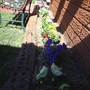 New Garden!!!