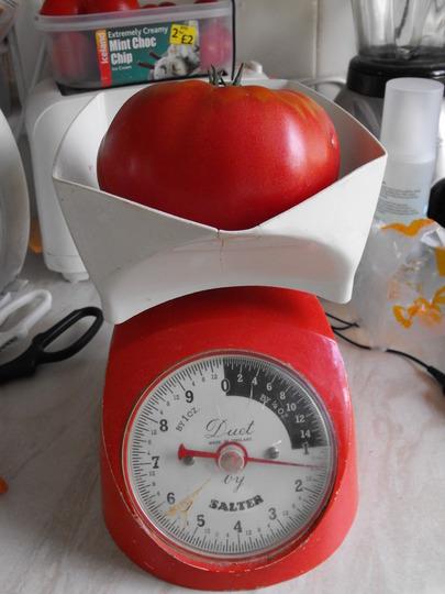"Tomato ""Brandywine""      1lb 8ozs.........My biggest ever..........."