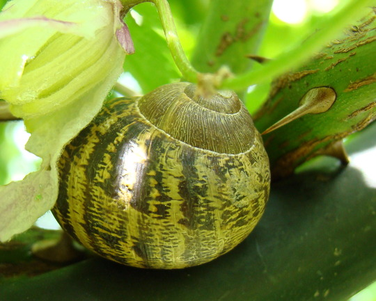 snail close up