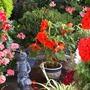 F017_my_garden_patio_area_pixie_aug_09_copy_one