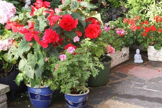 F024_My_garden_outside_back_door_Budha_Aug_09_copy_one.jpg