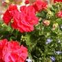 F025_My_garden_pot_on_wall_Aug_09_copy_one.jpg