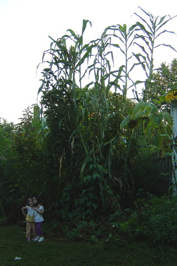 twin daughters standing next to Tehua Maize from Mexico