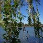 Edge of lagoon