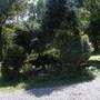 Before (The Evergreen Island)