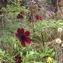 Gardenview3_13.09