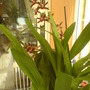 Picture_026.jpg (Orchid)