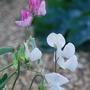 Garden_augustsept_09_016