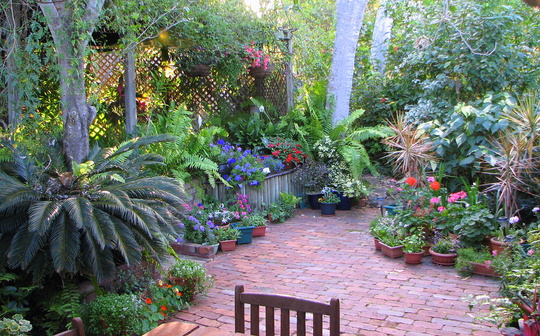Courtyard garden at the begnning of the downunder Spring - just over two weeks ago.