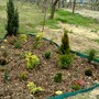 April 8th 2008. Conifer bed.