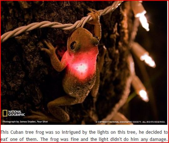 Switched on frog..... (frogius croakus)