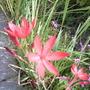 Nana_s_flowers_002
