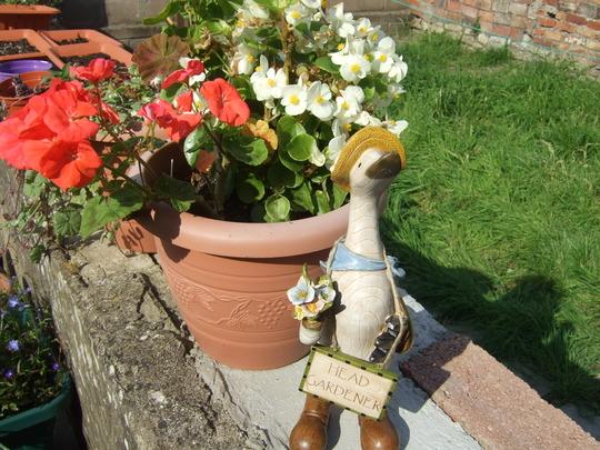 Daisy my New Head Gardener