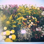 Shrewsbury Flower show - pre digital camera!