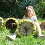 Daughter next to some sunflower heads