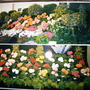 Shrewsbury Flower show - pre digital camera! (Begonia)