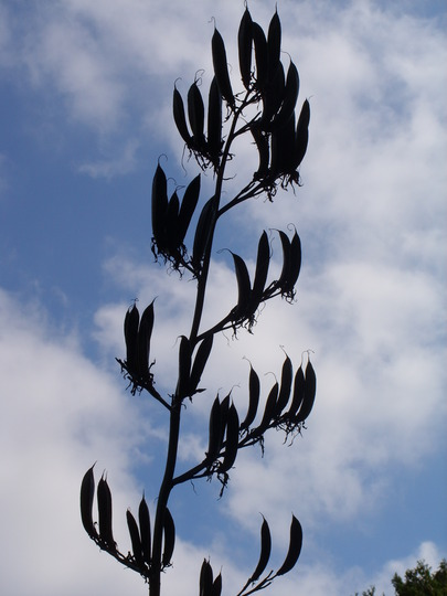 just liked the contrast against the sky..