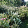 Phormium and ground cover roses