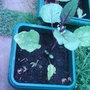Garden_photo_s_054