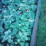 Garden_photo_s_051