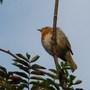 Robin - 24/09/09