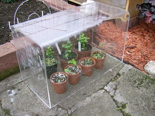mini mini greenhouse.