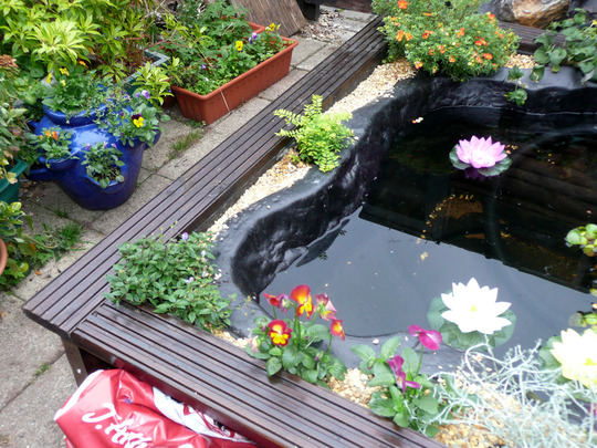 Pond Edging In Place Grows On You