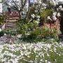 Spring has sprung! (Magnolia globosa (Globe magnolia))