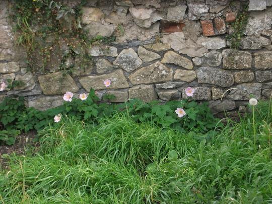 My neighbours garden