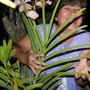 Orchids-Vanda