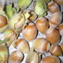 a hazelnut bounty