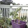 My front porch garden