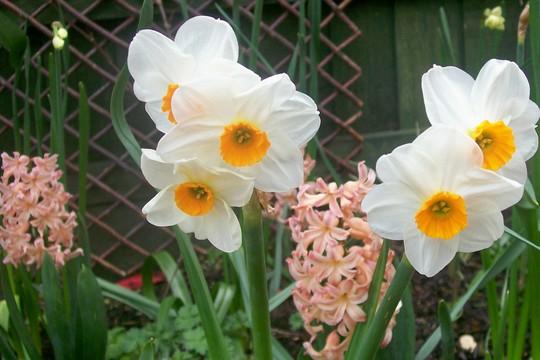 Lovely Spring Combo