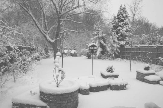 My_back_garden_in_the_snow.jpg