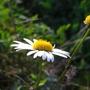 Wildflowers_at_Bedfont_Lakes_2.jpg