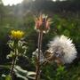 Wildflowers_at_Bedfont_Lakes_5.jpg