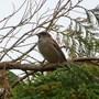 Sparrow on high!