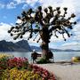 Swiss_tree