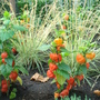 Physalis & Miscanthus, Garden Museum, London
