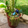 Succulent Container Garden (Carrot)