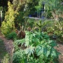 Hot_bed_monkey_puzzle_and_other_shrubs