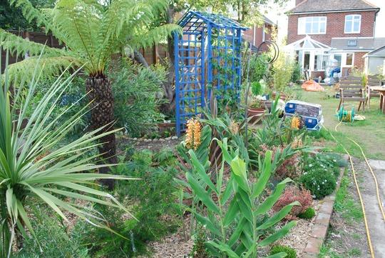 tree_fern_and_various_shrubs.jpg
