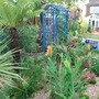 Tree_fern_and_various_shrubs