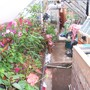 Garden_and_greenhouse_002