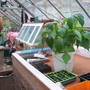 Garden_and_greenhouse_003
