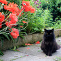 Anns_pics0010_adj_poppys_cat