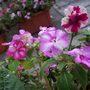 Flowers_013