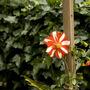 Red/white dahlia